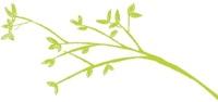 Leafy green branch